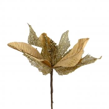 Χριστουγεννιάτικο Λουλούδι  Αλεξανδρινό Σαμπανί Χρυσό